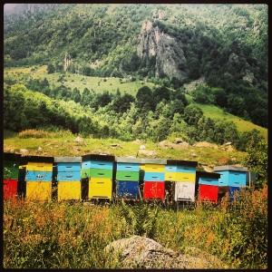 api in montagna